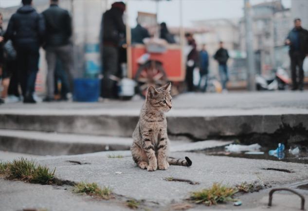 Sokak Hayvanlarının Güvenliği: Ne Kadar Farkındayız?