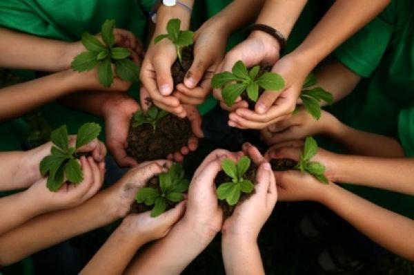 Organic School Gardens_home page1
