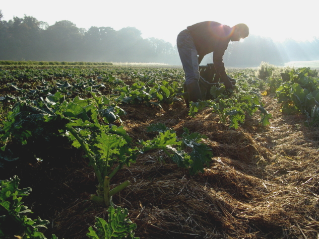 The-Pros-and-Cons-of-Using-Organic-Farming-Techniques