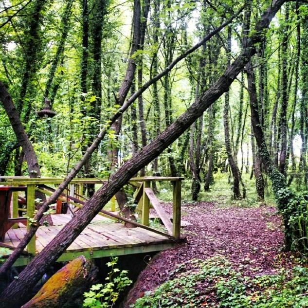 Günlük Ormanı