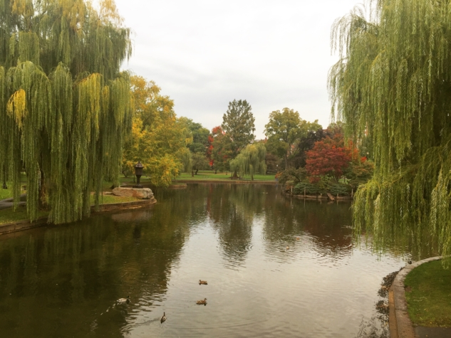 public garden 2