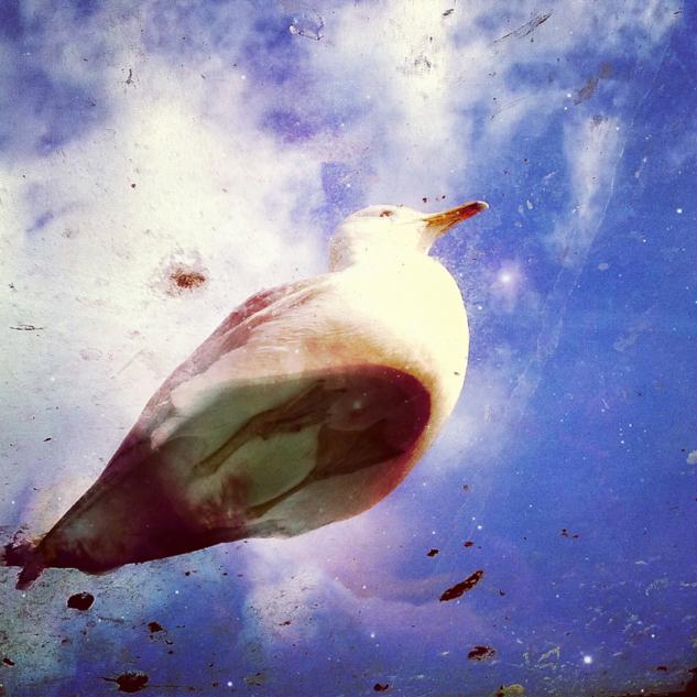 Upside Down by Dilan Bozyel