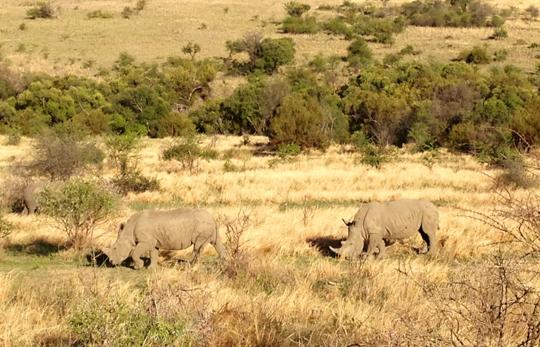 Safaride Gergedan