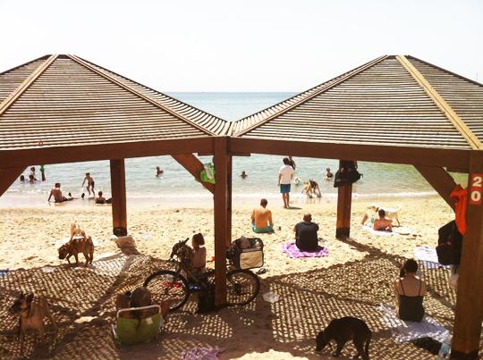 Tel Aviv Dog Beach
