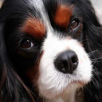 Tatil Geliyor; Peki Köpek Ne Olacak?