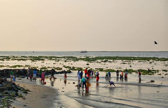 Fort Cochi plajı