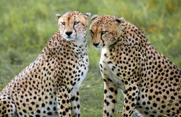 safari_81