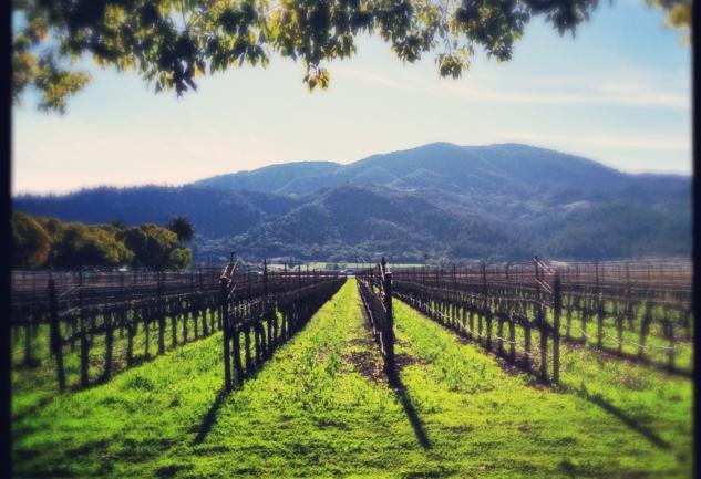 California Şaraplarının Kalbi: Napa Vadisi