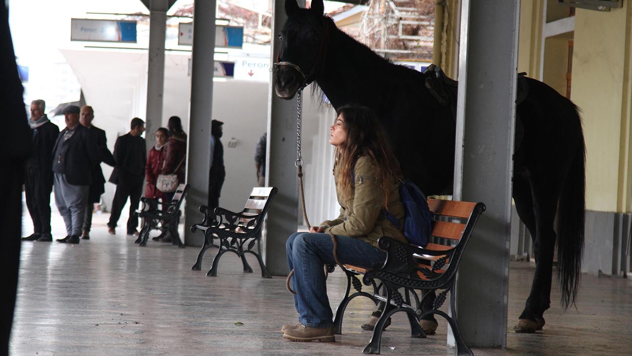 Black Horse Memories1
