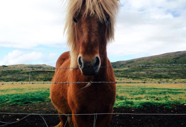 Fönlü Atlar, Şişman Koyunlar ve Karşınızda İzlanda'nın Golden Circle'ı