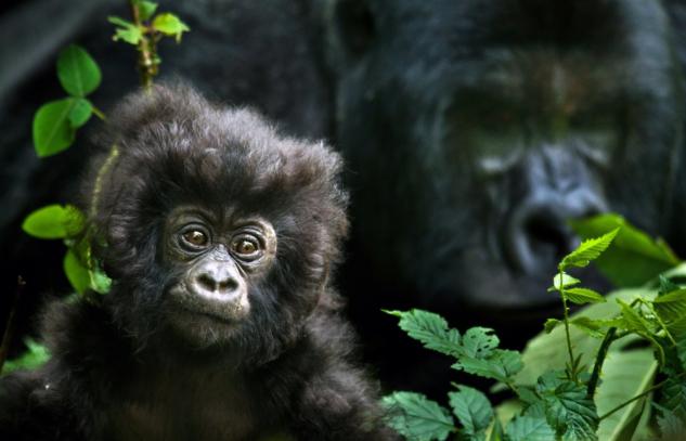 En İyi Vahşi Doğa ve Hayvan Belgeselleri