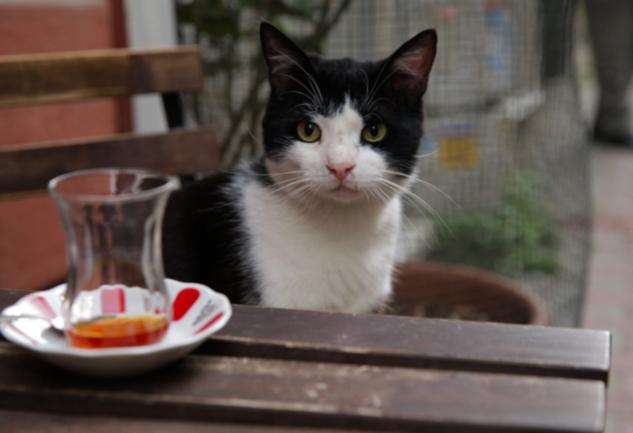 Kedi Filmleri: Kediler Olmadan Asla Diyenlere