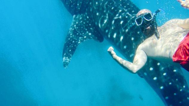 Balina Köpekbalıklarıyla dalış3, Oslob Filipinler