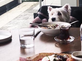 MSA'nın Restoranı: Hayvan Dostu Bir Mekan