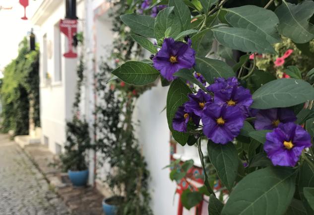 Bozcaada Önerileri: Bozcaada'da Dolu Dolu İki Gün