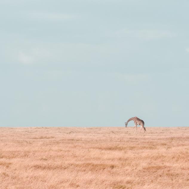 bayaiyi-serengeti