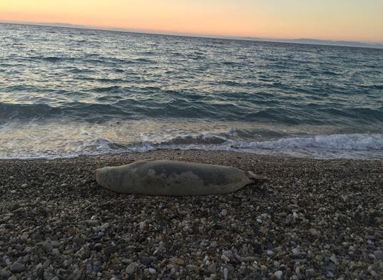 Bir Küçük Ada Burnumda Tüten: Samos