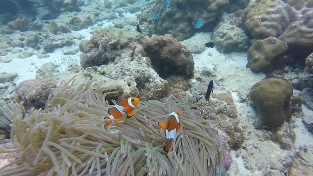 Phi Phi Adası: Nemo'nun Peşinde Keşif Dolu Bir Yolculuk
