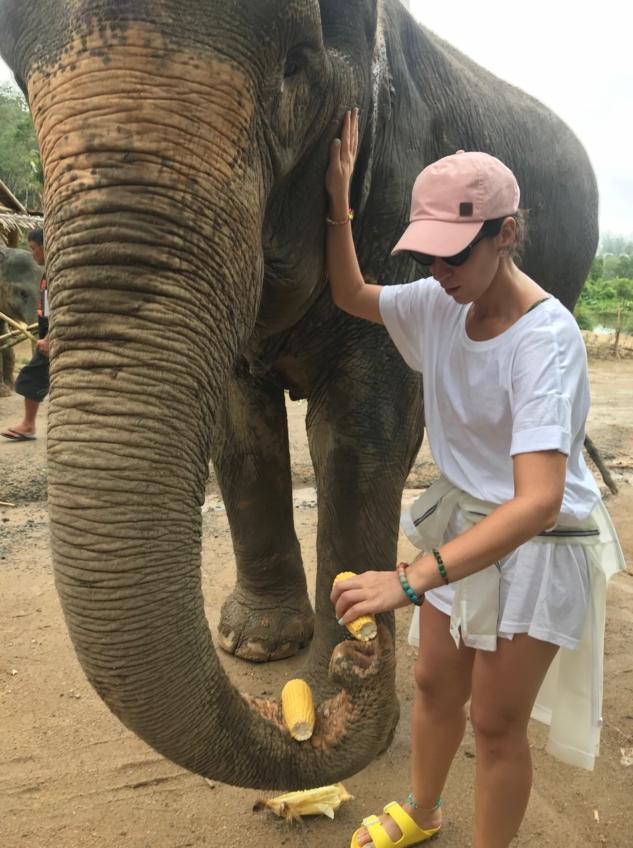 Elephant Jungle-1