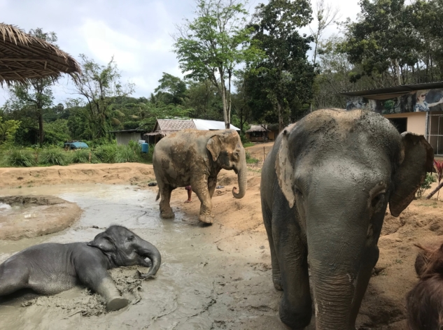 Elephant Jungle-2