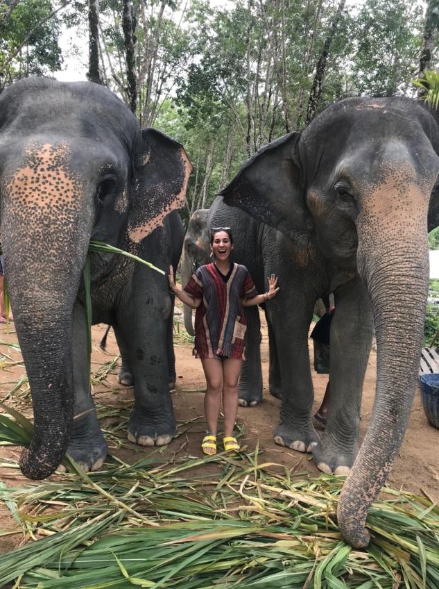 Elephant Jungle-4