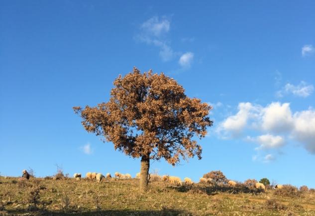 Kış Mevsiminde Leziz Bir Cunda Rotası ve Ma'adra Vineyards