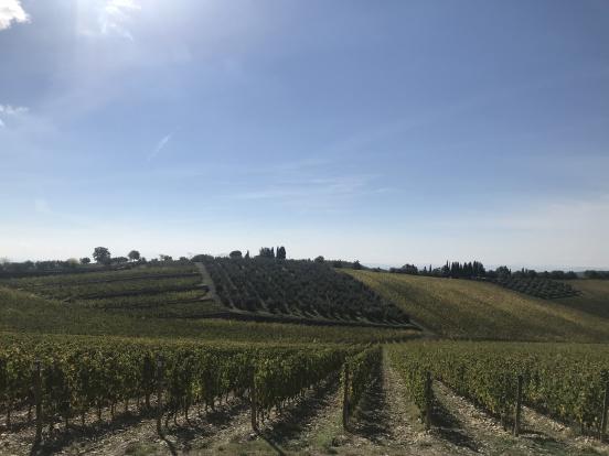 Toskana: Doğa, Tarih ve Şarap Rotası