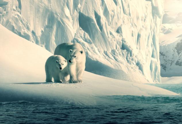 Our Planet: Geleceğimizin Korkutan Durumunu Hatırlatan Belgesel