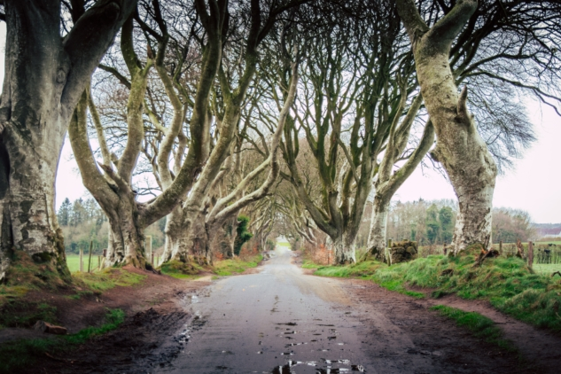 game of thrones mekanları – dark hedges – nick kane