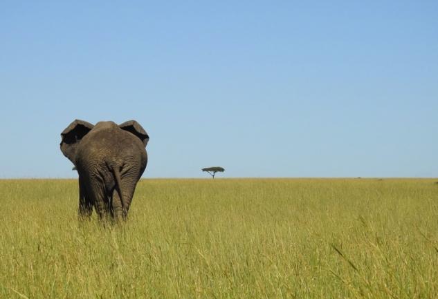 Serengeti: Büyük Göç Zamanı Eşsiz Bir Safari Deneyimi