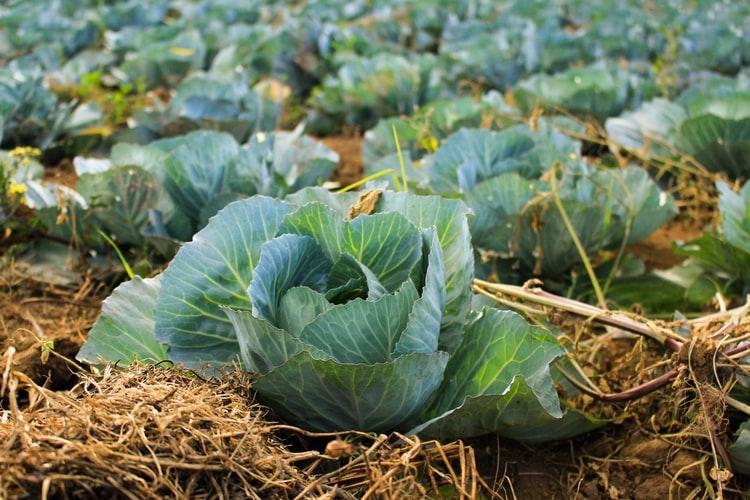 Dünya Gıda Günü | Fotoğraf: Unsplash / Arnaldo Aldana