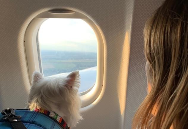 Köpeklerle Seyahat: Dikkat Etmeniz Gereken Her Şey