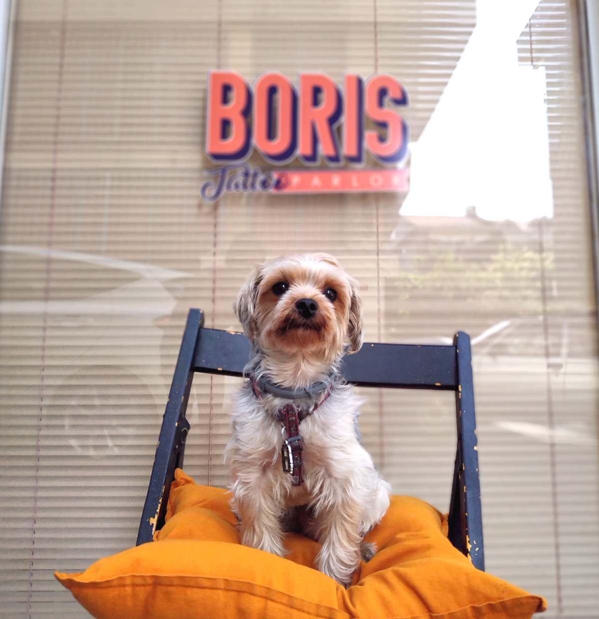 Patron Boris