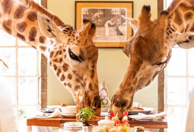 Giraffe Manor: Kenya'da Zürafalarla Çevrili Bir Butik Otel