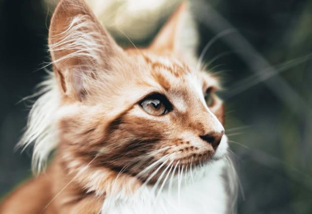 Kedi Davranışları: Minik Sırları Çözüyoruz!
