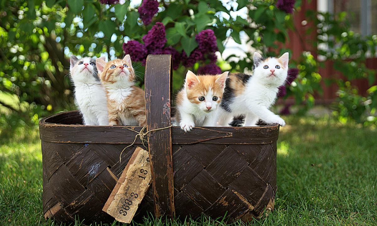 Kedilerin İlginç Davranışları