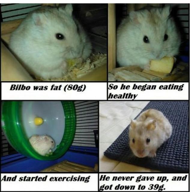 Bilbo Kilo Veren Hamster
