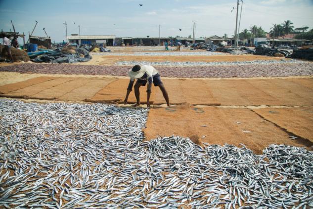 Negombo'da Balık Kurutanlar, Sri Lanka