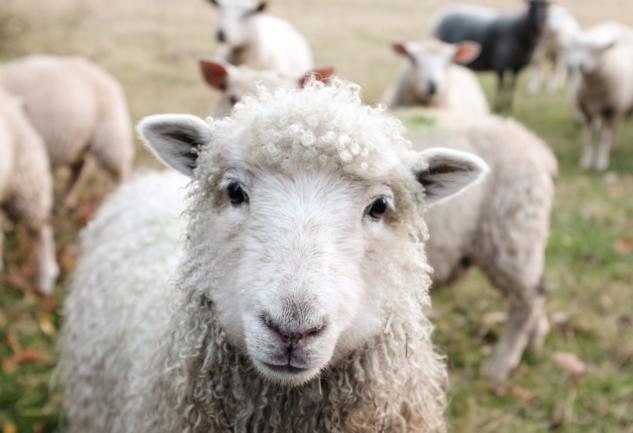 Bir Aydınlanma Konusu Olarak Veganlık: Geçtiğim Yollar