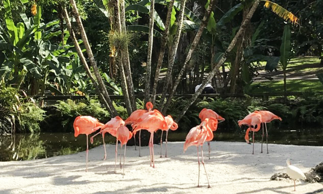 Flamingo Garderns