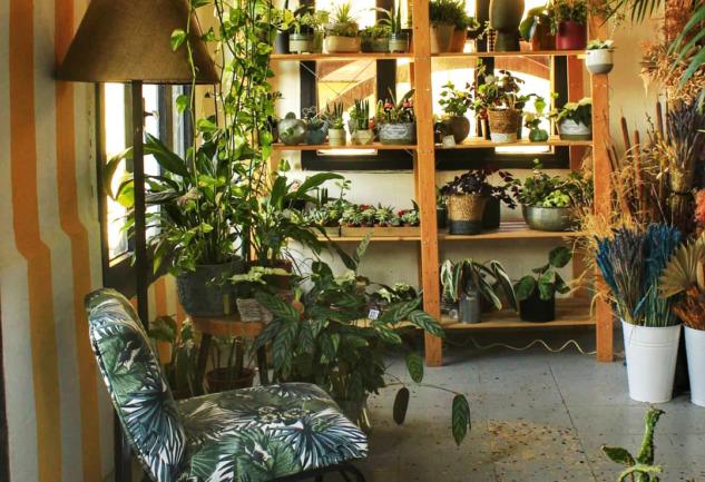 Plantsta Botanik & Cafe: İzmir'in Yemyeşil Botanik Cafesi