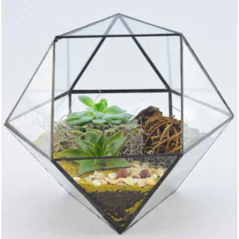 Plantsta Teraryum
