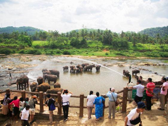 Sri Lanka: Fotoğraf Sanatı İçin Seçilmiş Bir Rota