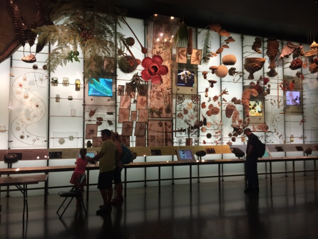 Amerika Ulusal Doğa Tarihi Müzesi