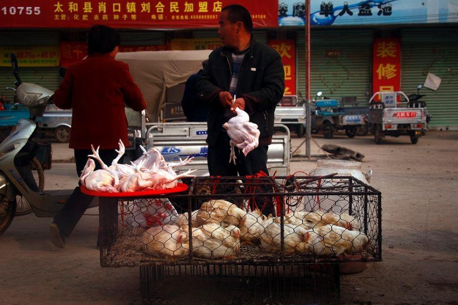 Çin hayvan pazari