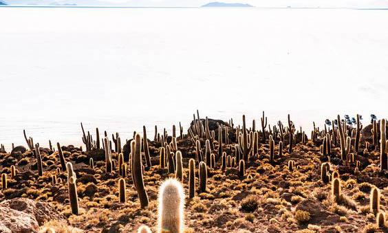 Incahuasi, Kaktüs Adası
