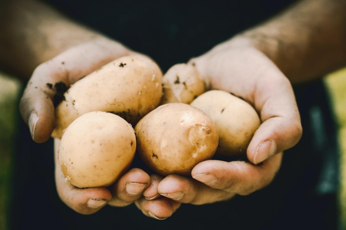 irlanda mutfağı - patates