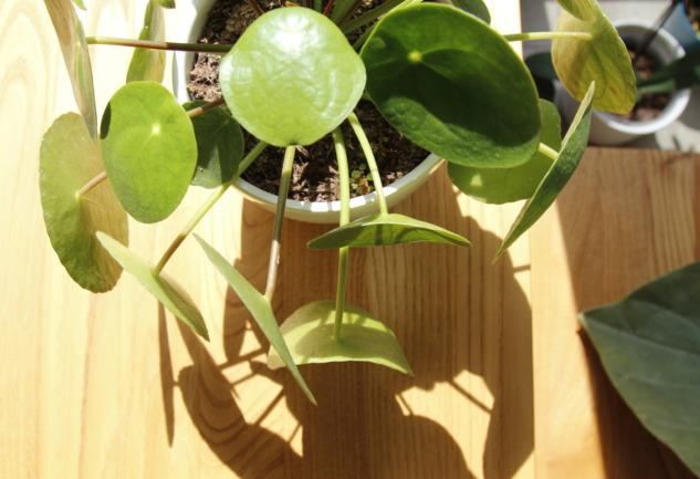 Bitkilerle Bağ Kurabilirsiniz: Anlatmak İstediklerini Dinleyin