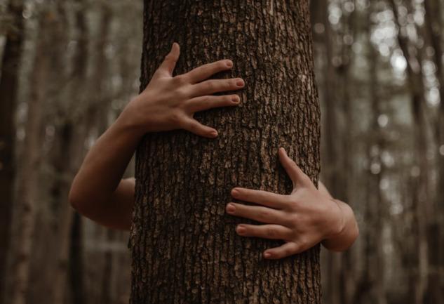 Ağaçlara Sarılmak: Doğayla Gelen Eşsiz Bir Huzur Bulma Hali