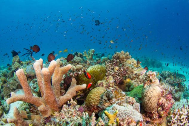 Coron Adası'ndaki Mercan Kayalıkları